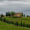 WBb1094 - Vineyards, Chianti, Italy