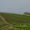 WBb1100 - Vineyards, Chianti, Italy