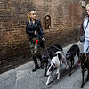 PB120 - Walking the Dogs, Siena, Italy