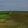 WBb1108 - Vineyards, Chianti, Italy