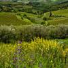 WAb108 - View form Monteriggioni, Tuscany, Italy