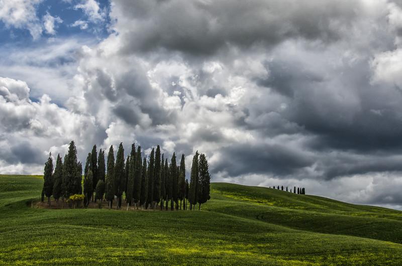 WBb1303 - Cedar Trees, Chianti, Italy