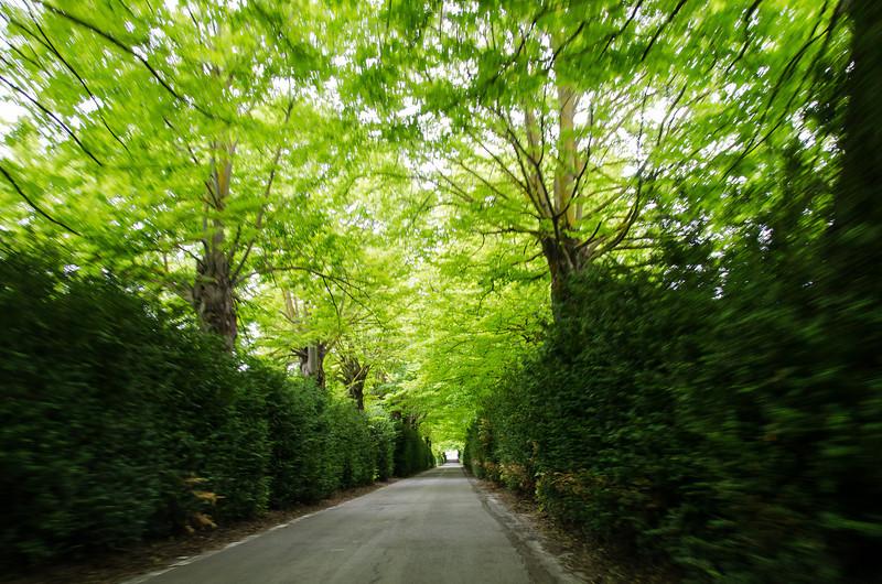 WAb590 - Roadway, Tuscany, Italy