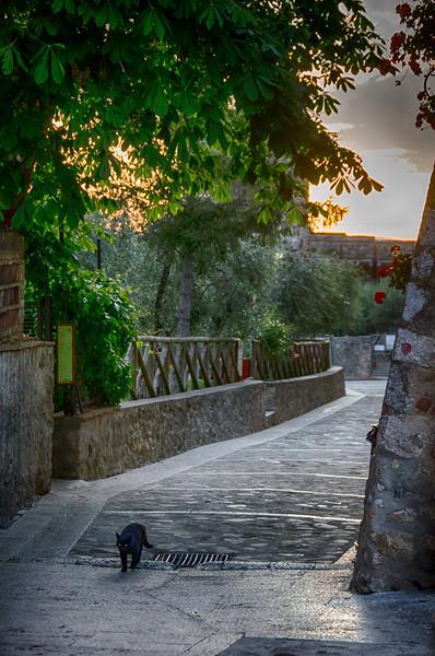 WAb1042 - Black Cat, Monteriggioni, Tuscany, Italy