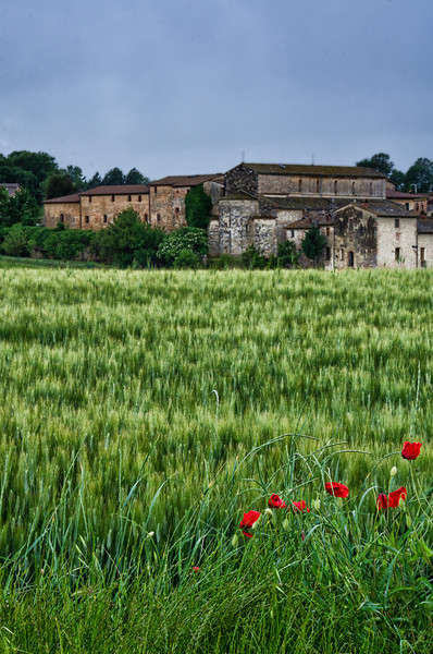 WBb1294 - Poppies and Wheat Field, Monteriggioni, Tuscany, Italy