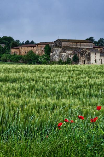 WBb1294 - Poppies and Wheat Field, Monteriggioni, Tuscany, Italy