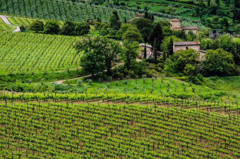 WAb114 - Vineyards, Chianti, Italy