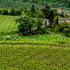 WAb114 - Vineyards, Chianti, Italy