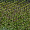WAb34 - Vinyards, Castelllina in Chianti,Tuscany, Italy