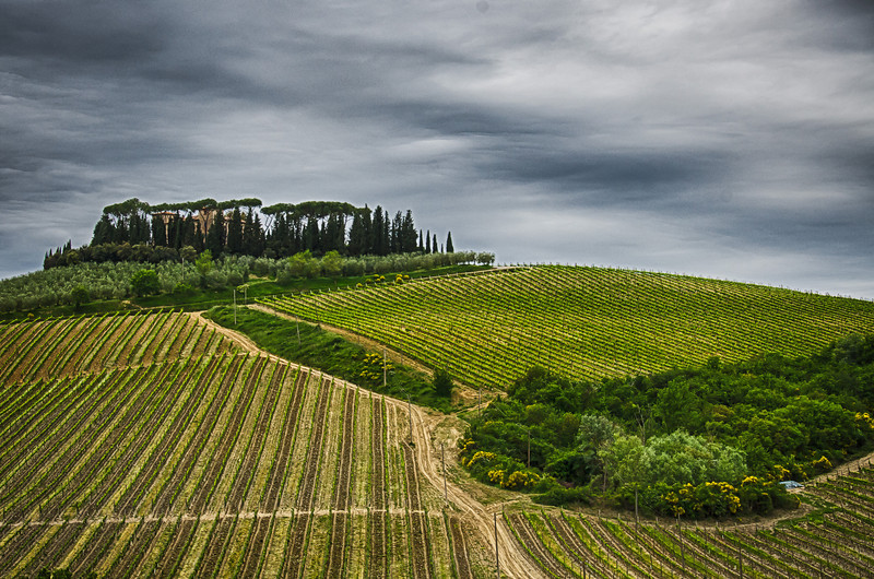 WBb593 - Vineyards, Chianti, Italy