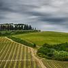 WBb593 - Vineyards, Chianti, Italy