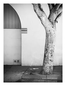 Arch & Tree