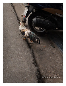 Playing Chicken With A Motorcycle