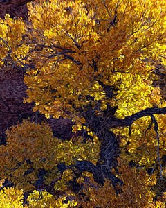 A cottonwood tree (Populus spp.) along the Burr Trail Road, Capitol Reef National Park, Utah, USA. Treatment done with Adobe Pixel Bender.