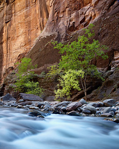 """The Narrows""  The Narrows, a hike up the Virgin River in Zion National Park, Utah, USA. Taken in the fall."