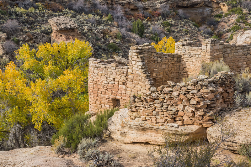 Unit Type House in the foreground, with Fremont's cottonwoods (Populus fremontii) growing below in the canyon. Taken on the Little Ruin Trail in Hovenweep National Monument, Utah, USA.