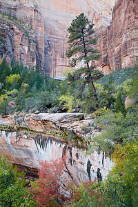 """Enchanted Fall""  A trickle of water falls over an ""enchanting"" area in Zion National Park, Utah, USA. The image was taken from a vantage point along the trail to the Emerald Pools."
