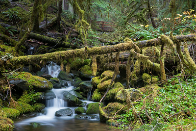 """Mossy Green""  Cascades along the trail to Sol Duc Falls. Taken in Olympic National Park, Washington, USA."