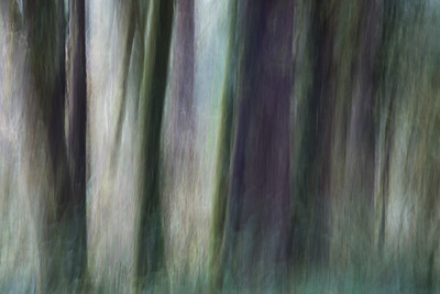 """Forest Spirits""  Long exposure of tree trunks, with camera movement. Taken in the Hoh Rain Forest, Olympic National Park, Washington, USA."