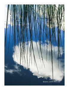 Reeds & Reflections
