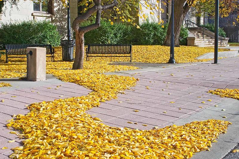 Yellow'd Brick Road