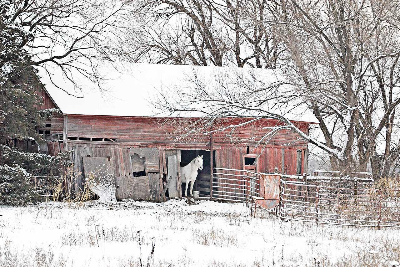 White Horse, Red Barn
