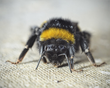 Bee by Heidi Burton, Weston-super-Mare Photographer