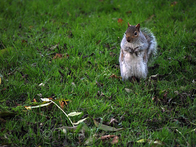 Squirrel by Heidi Burton, Weston-super-Mare Photographer