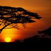 WAb1  African Sunset, Serengetti NP, Kenya