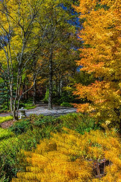 WAa 1654 Fall Colors #3, Gibbs Botanic Gardens, Ball Ground, Georgia