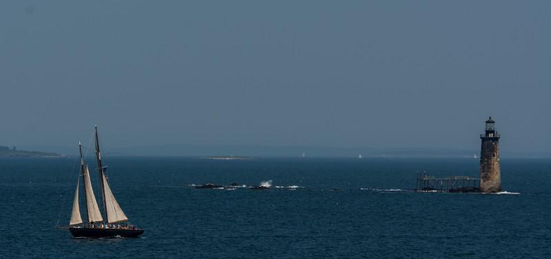 WAa1792 Sailboat off Portland Head Light, Cape Elizabeth, ME.nef