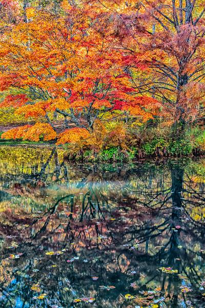 WAa 1680  Fall Color Reflections #5, Ballground, GA