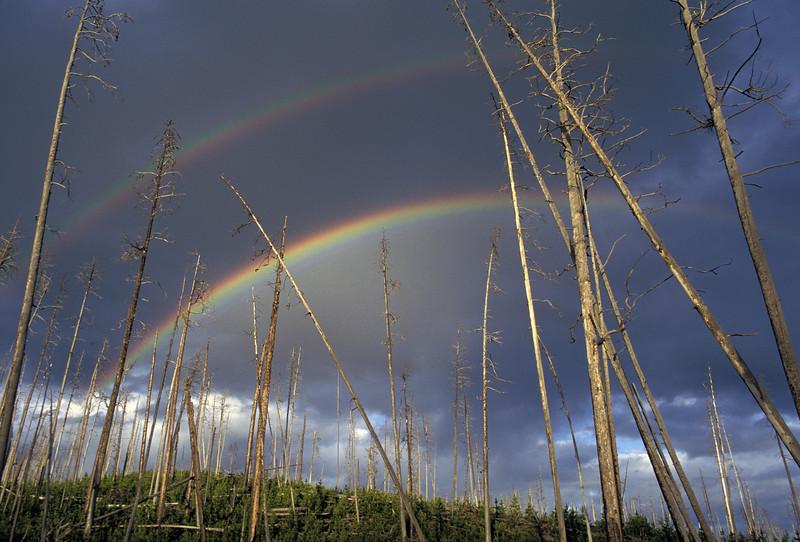 WAa4 - Double Rainbow, Yellowstone NP, WY