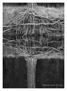 Roots & Reflection