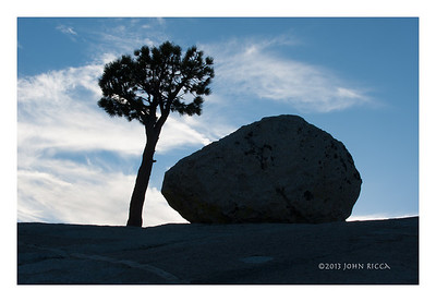 Tree & Rock At Olmsted Point