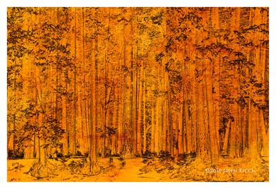 Yosemite Collage 6