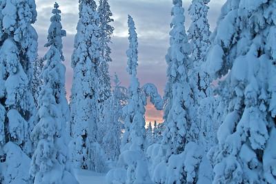 Winterwald - Lappland, Schweden