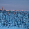 Morgenlicht streift die Baumwipfel - Lappland, Schweden<br /> <br /> Morning light touches the treetops - Lapland, Sweden