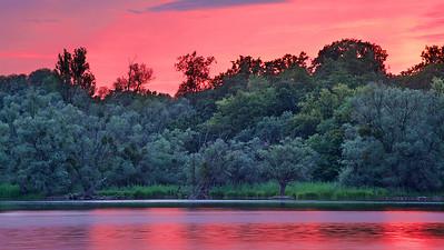 Salix alba in Sunset