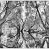 Alte Silberweiden im Altrhein - Illinger Altrhein, mittlerer Oberrhein, Deutschland<br /> <br /> Technische Daten:<br /> Canon EOS 5D MK III,<br /> Canon EF 17-40 f/4 L, ISO 100,  19mm,  f11<br /> Gitzo Stativ im Hochwasser aufgebaut,<br /> Kamera-Einstellung aus dem Kanu aus vorgenommen,<br /> Ausschnitt über Live-View eingestellt,<br /> Nachdem sich das Wasser wieder beruhigt hatte, ausgelöst über Fernauslöser.<br /> Aufgrund der hohen Kontraste: <br /> 3 Aufnahmen -> HDR -> Schwarz-Weiß