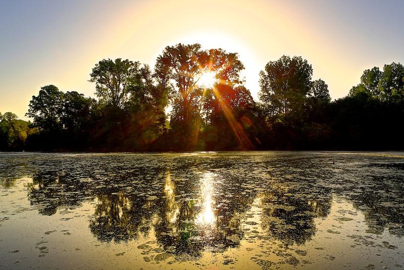 Sonnenaufgang am Altrhein
