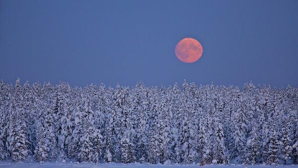 Mondaufgang - Arvidsjaur, Lappland, Schweden  Moonrise - Arvidsjaur, Lapland, Sweden - mehr dazu im Blog: Winter in Lappland