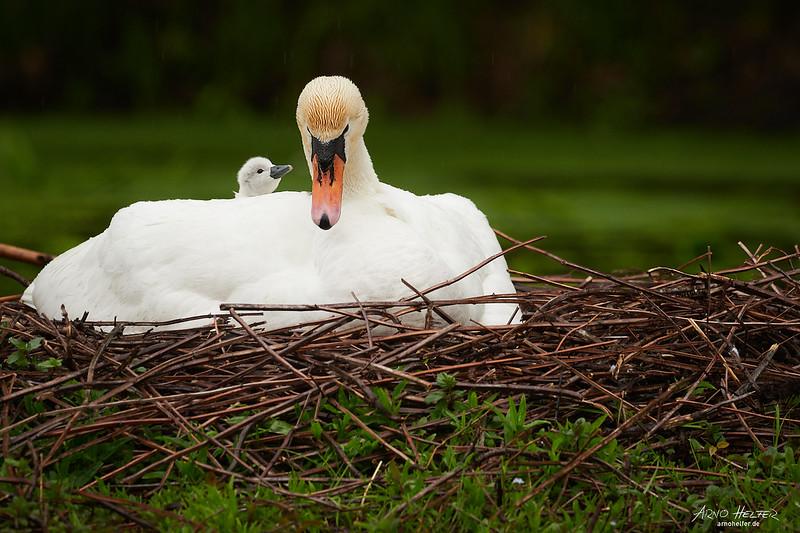 Das Erstgeborene auf dem Rücken der Mutter
