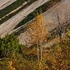 Birken (Betula) - Hahntennjoch , Tirol, Österreich