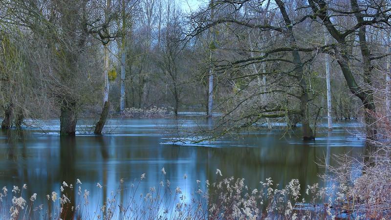 """Hochwasser am Altrhein - Au am Rhein, Deutschland <br /><br />  Flood on the Old Rhine - Au am Rhein, Germany <br /><br /> - mehr dazu im Blog: <br /><a href=""""http://arnohelfer.wordpress.com/2012/12/26/bunte-weihnachten-am-altrhein/"""">Bunte Weihnachten am Altrhein</a><br />"""
