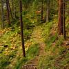 Bunter Farn im Wald - Hochimst, Tirol, Österreich