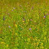 "Wildblumenwiese<br /><br />  Wildflower meadow<br /><br />  - mehr dazu im Blog: <a href=""http://arnohelfer.wordpress.com/2013/05/26/wildblumenwiese/"">Wildblumenwiese</a>"