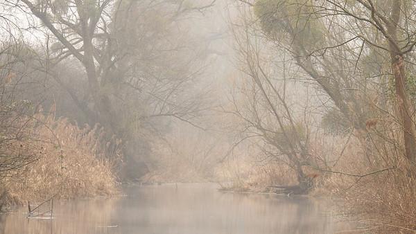 Früher Morgen am Federbach - bei Rheinstetten, Deutschland Early morning at the Federbach - near  Rheinstetten, Germany  - mehr dazu im Blog: Rheinauen Kalender 2013
