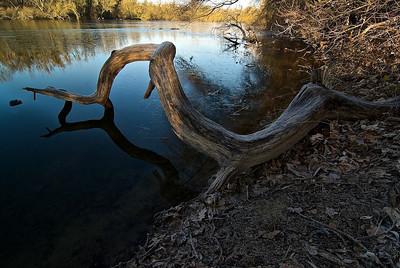 Alter Baum am Ufer des Fermasee