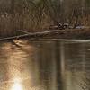 """Winterliche Uferzone - Fermasee, Rheinstetten, Deutschland<br /><br />  Winter littoral zone - Fermasee, Rheinstetten, Germany<br /><br /> - mehr dazu im Blog: <br /><a href=""""http://arnohelfer.wordpress.com/2013/02/04/sony-rx100-und-canon-5d-mark-iii/"""">SONY RX100 und CANON 5D Mark III</a><br />"""